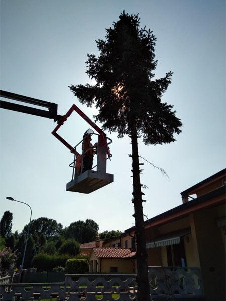 abbattimento-alberi-reggiolo-gonzaga