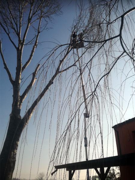abbattimento-costo-grossi-alberi-gonzaga