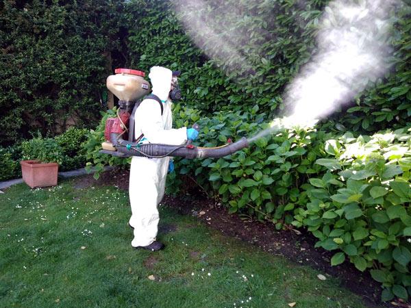 eliminare-formiche-zanzare-e-scarafaggi-reggiolo