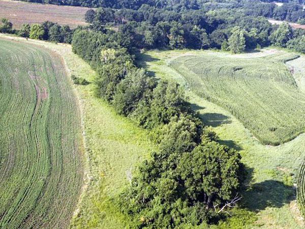 fasce-tampone-boscate-terreni-agricoli-gonzaga
