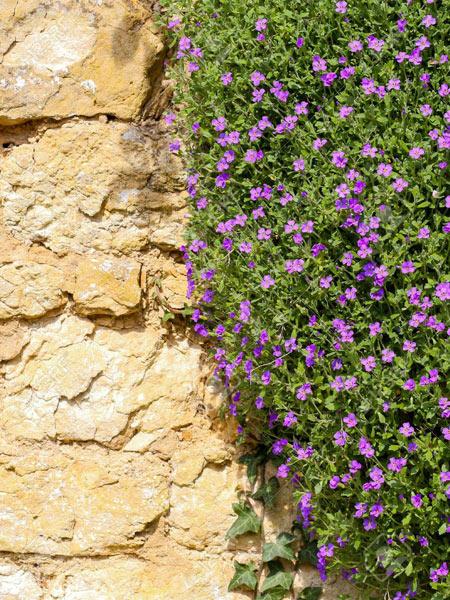 pareti-coltivate-con-piante-particolari