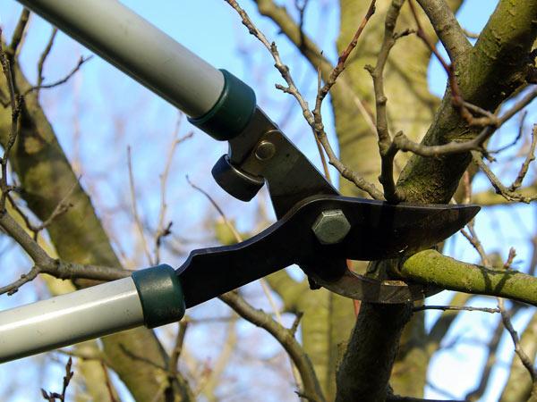 potatura-e-manutenzione-alberi-san-giacomo-delle-segnate