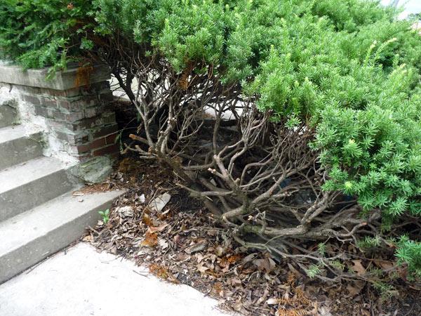 scegliere-alberi-tipici-della-zona
