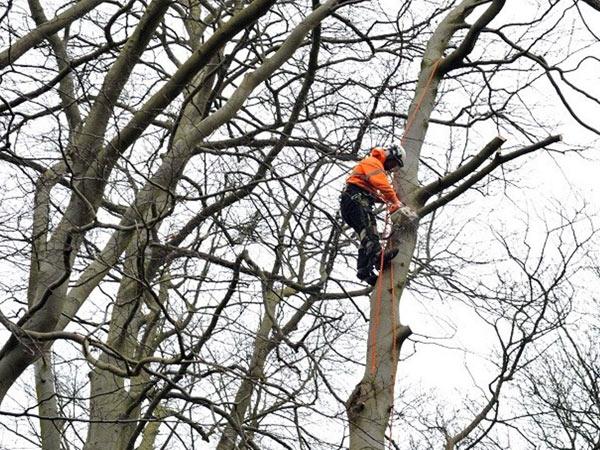 taglio-alberi-alto-fusto-gonzaga